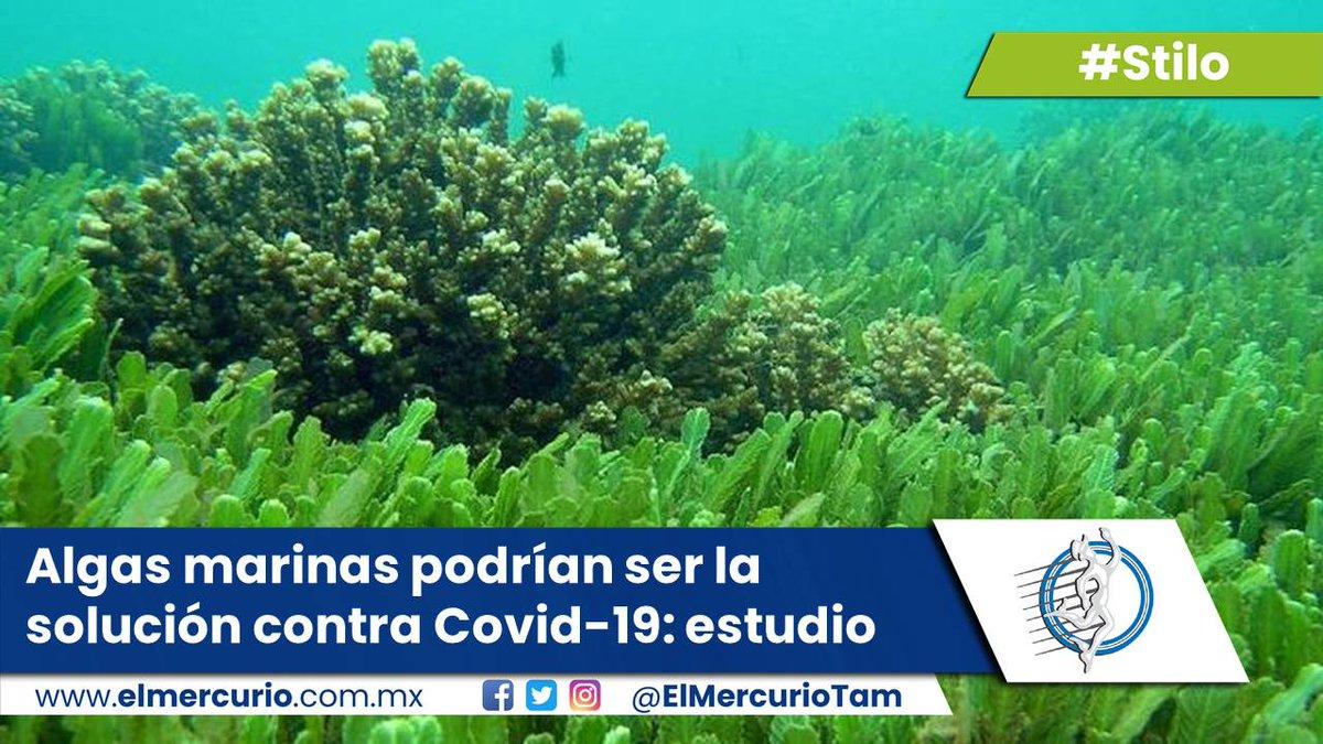 #Stilo Algas marinas podrían ser la solución contra Covid-19: estudio  - https://t.co/lo15nLwhdx #Covid19 #México #CDMX #Francia #Italia #Rusia #China https://t.co/0JoY3ZqhIS
