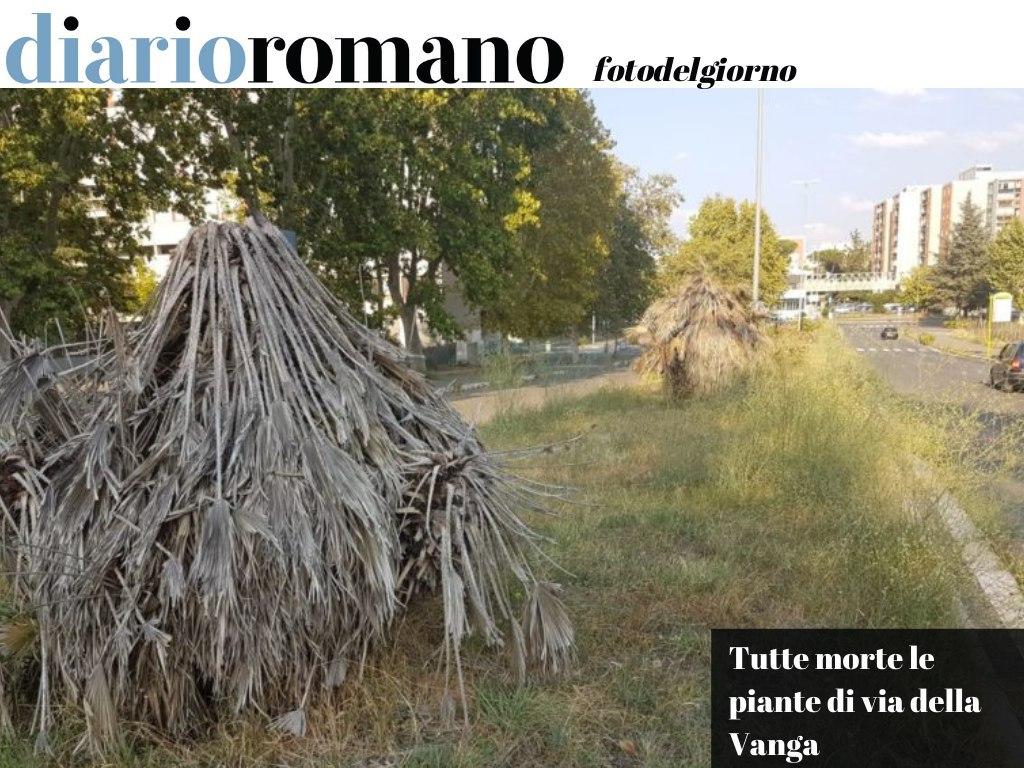 test Twitter Media - Tiburtino III. Era una bella aiuola spartitraffico adornata da 17  chamaerops ma ormai niente resiste al #degrado e all'incuria. . #Roma #fotodelgiorno 📸 https://t.co/Iqs3E2OYoF