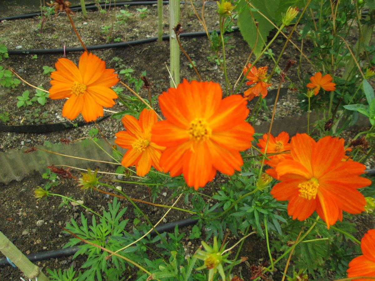 『オレンジ色の花』  #TLを花でいっぱいにしよう https://t.co/65D7XKNwzF