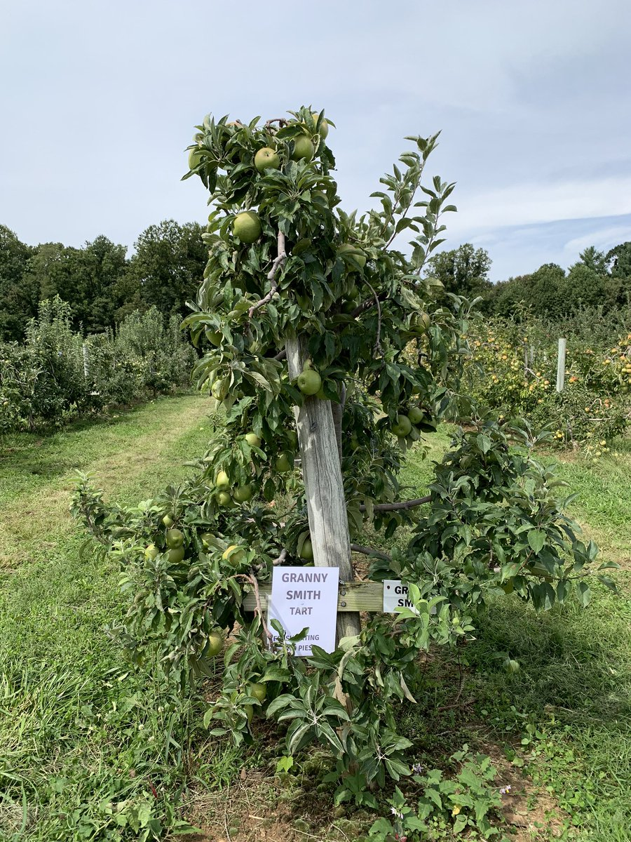 Self Care September @ChathamCoSch #BeTheOne Apple picking and eating, NC mountains ❤️ https://t.co/ROXNEfu2Sx