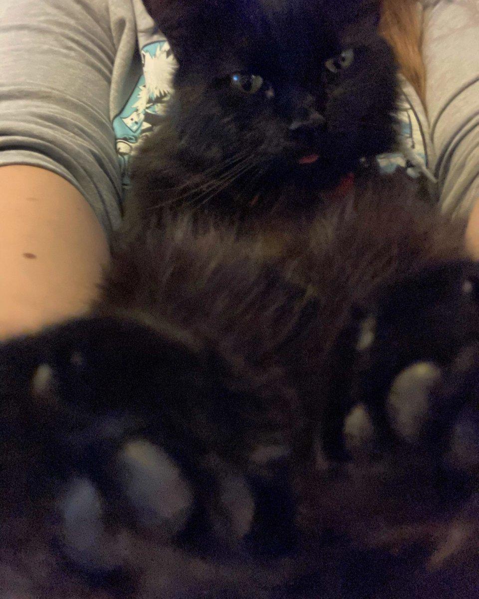 Little blep with bonus toe beans   #Cats #Cat #Kittens #Kitten #Kitty #Pets #Pet #Meow #Moe #CuteCats #CuteCat #CuteKittens #CuteKitten #MeowMoe    https://t.co/kb4ai7UYFz https://t.co/O9moy5FLWl