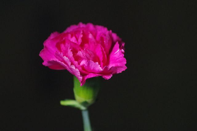 赤紫色の花、K-50 (90macro)で撮影 #写真撮ってる人と繋がりたい #写真好きな人と繋がりたい #PENTAX #PentaxK50 #TLを花でいっぱいにしよう https://t.co/a0Y9OgWyPW