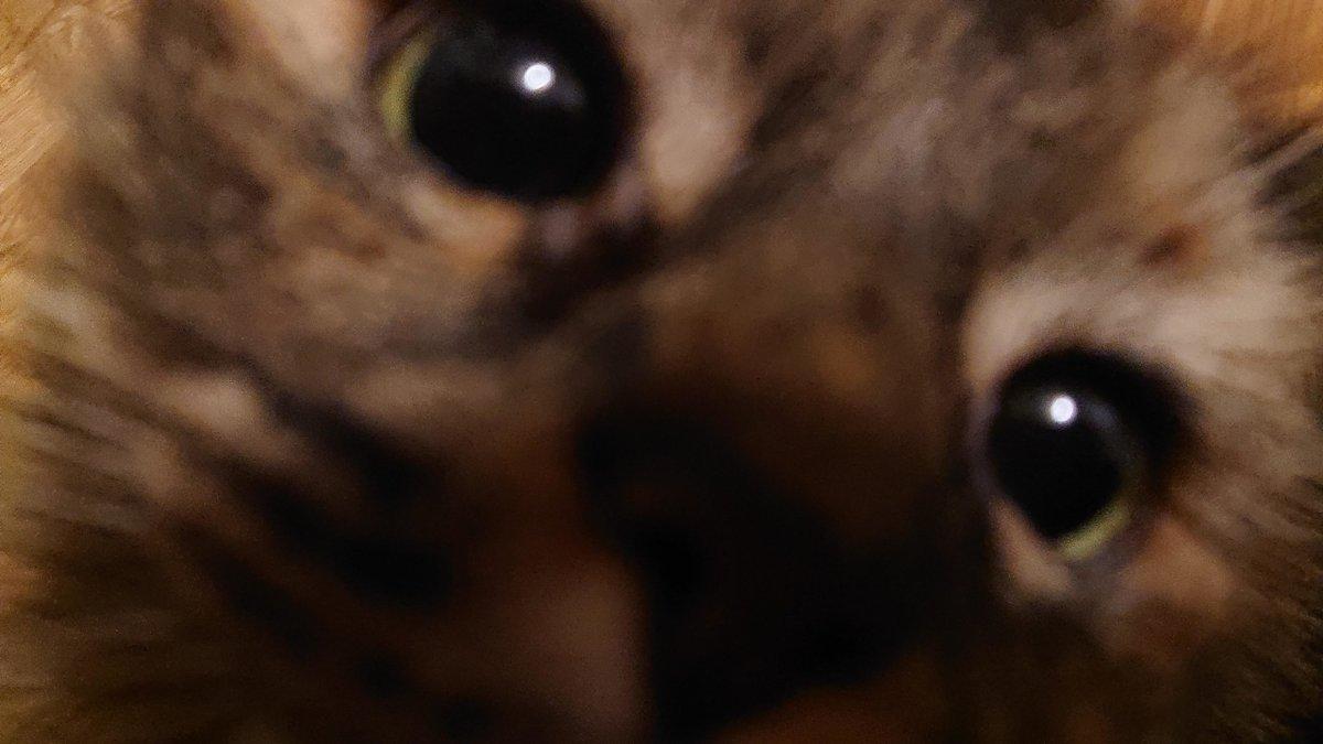 My #Cat #Jumped in my #Camera last second   #Cats #Cat #Kittens #Kitten #Kitty #Pets #Pet #Meow #Moe #CuteCats #CuteCat #CuteKittens #CuteKitten #MeowMoe    https://t.co/mhgkSeKKS0 https://t.co/TUvMbwrVdp