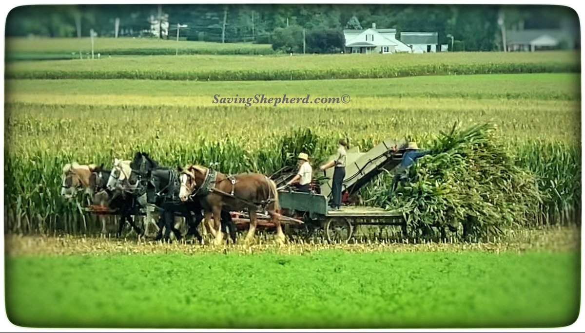 "Today's Truth ""U are poor only when u want more than u have."" #Amish #proverb ❤️ #wealth #success #quoteoftheday #photooftheday #money #happiness #quote #savingshepherd #life #phototography #country #picoftheday #horses #picture #farm #photo #harvest #picture #travel #pic #usa https://t.co/OqfMOeBkSZ"