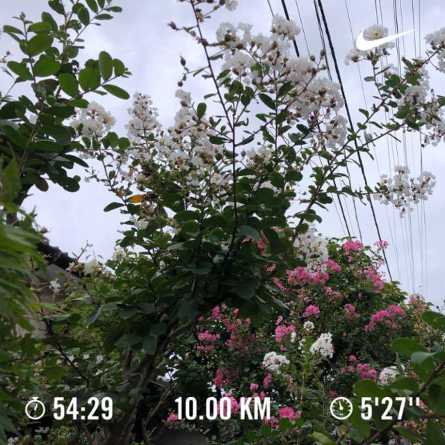 目覚ましラン⏰🏃♂️ 小雨が降ったりましましたが、涼しくて快適です。 秋バンザイ🙌 大会シーズンに向けて、少しずつペースアップして行きます。 Nike Run Club アプリで 10.00 kmを走りました #JustDoIt https://t.co/Y2Q1An3T2N