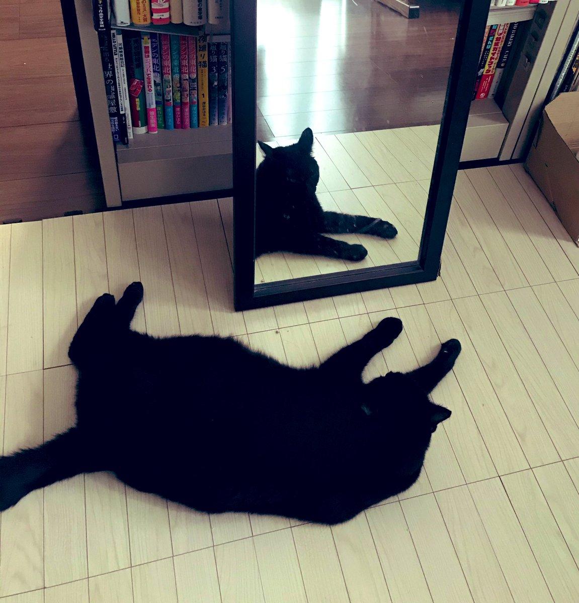 本人は横になってるのに、鏡の中は起きているみたいな写真撮れた。角度の違いだけど、不思議。