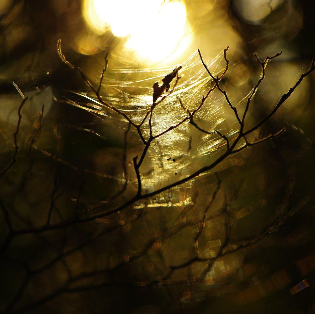 森の光 何が美しいと思うかは人それぞれですが、私はこういう光景が美しいと思います。 #森の光 #pentax https://t.co/0WGK6Ad1OZ