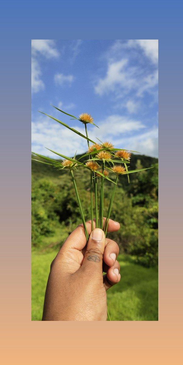 🍂 Blissful 🍂  #NaturePhotography  #blueskies  #bluesky  #NatureForLife  #nature  #naturelover  #beautifuldestinations  #goa https://t.co/YBpbLI1zRk