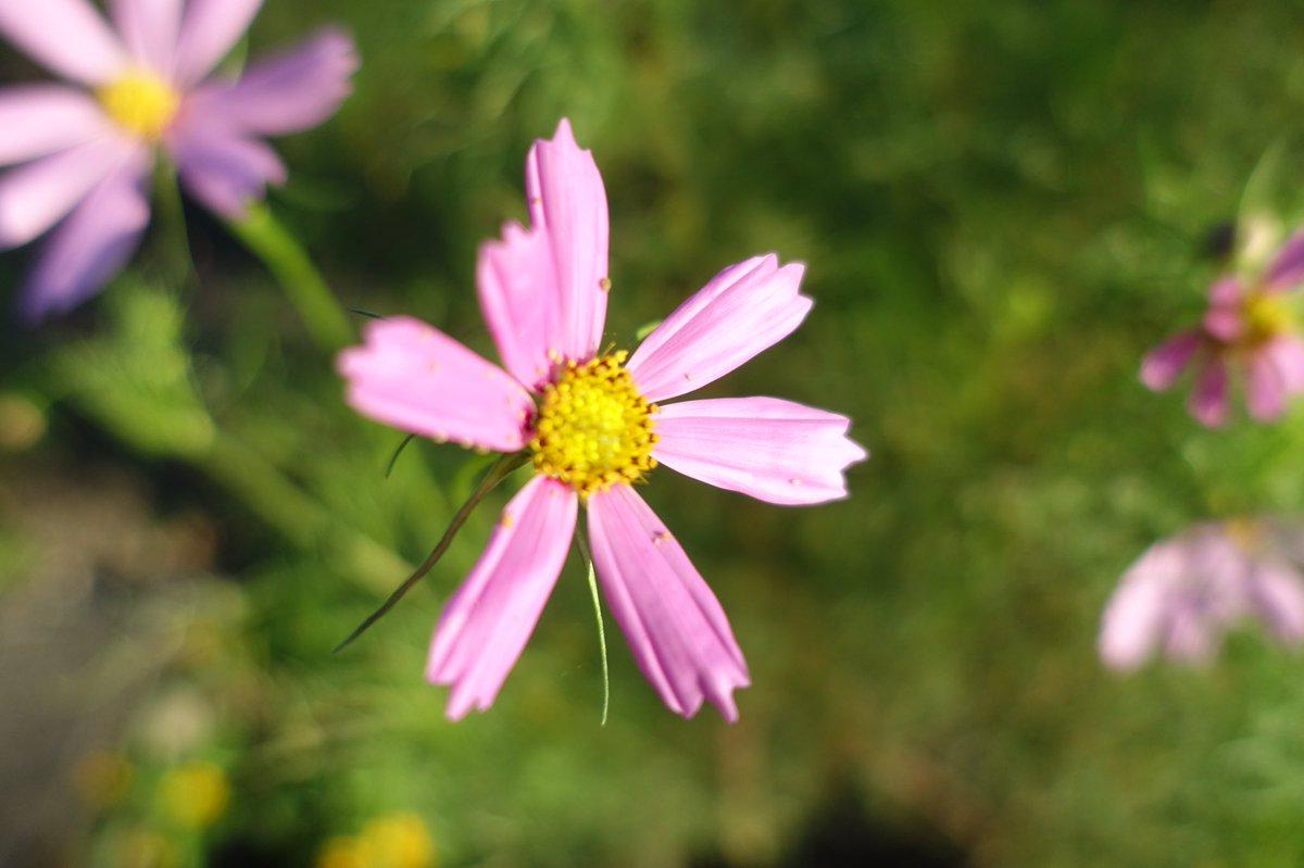 #ありがとう  #thankyou  #感謝の気持ちを込めて  #withgratitude  #花 #flower  #ファインダー越しの私の世界  #photography  #あなたの幸せを願います #iwishyouhappiness  #pray https://t.co/Mm0XihvYqU