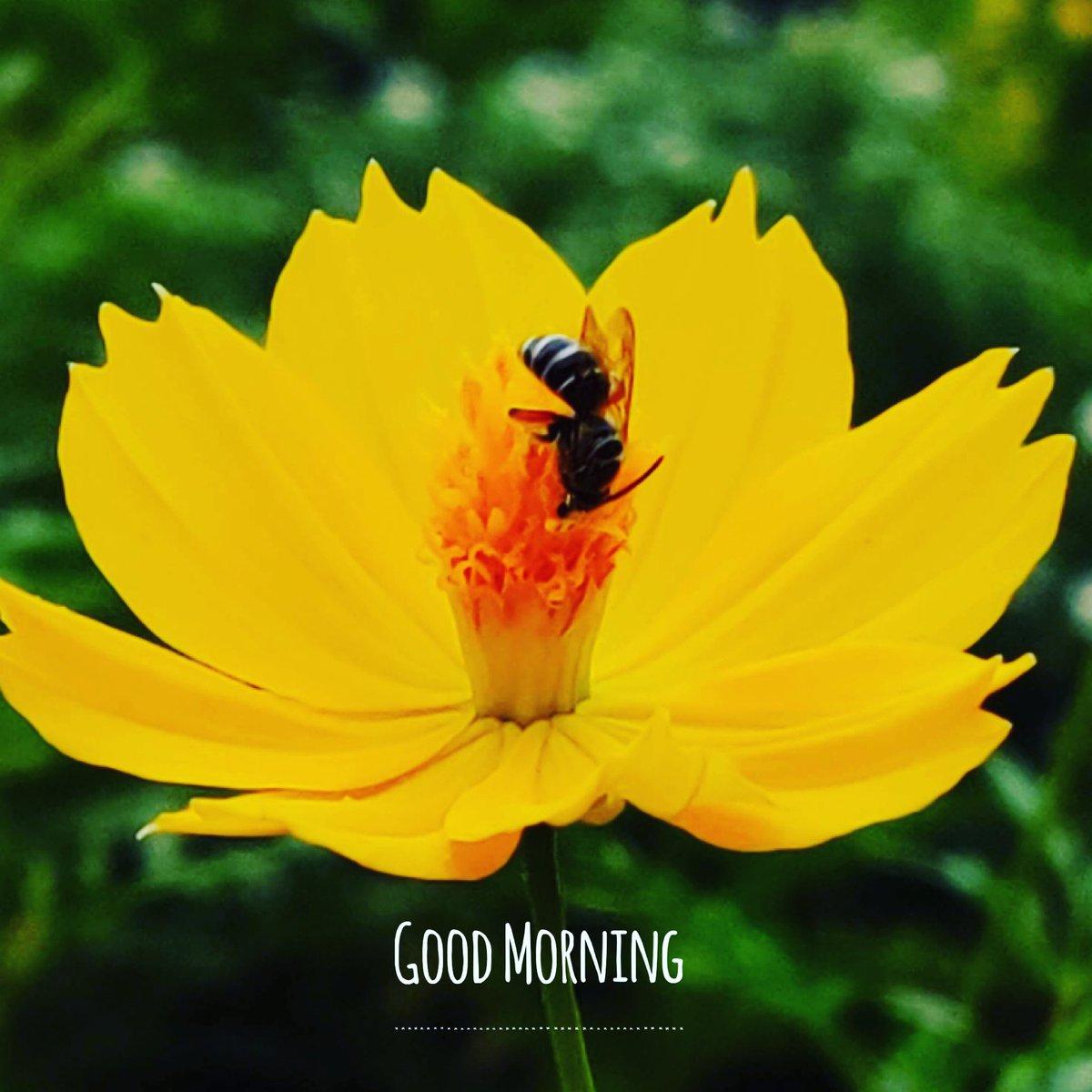 The power of imagination makes us infinite. Good Morning & happy Sunday.  —— #goodmorning #sundayfunday #motivationalquotes #thoughtoftheday #flower #earlymorning #pleasant #morningmotivation #morninginspiration https://t.co/n6bwPlUGAM
