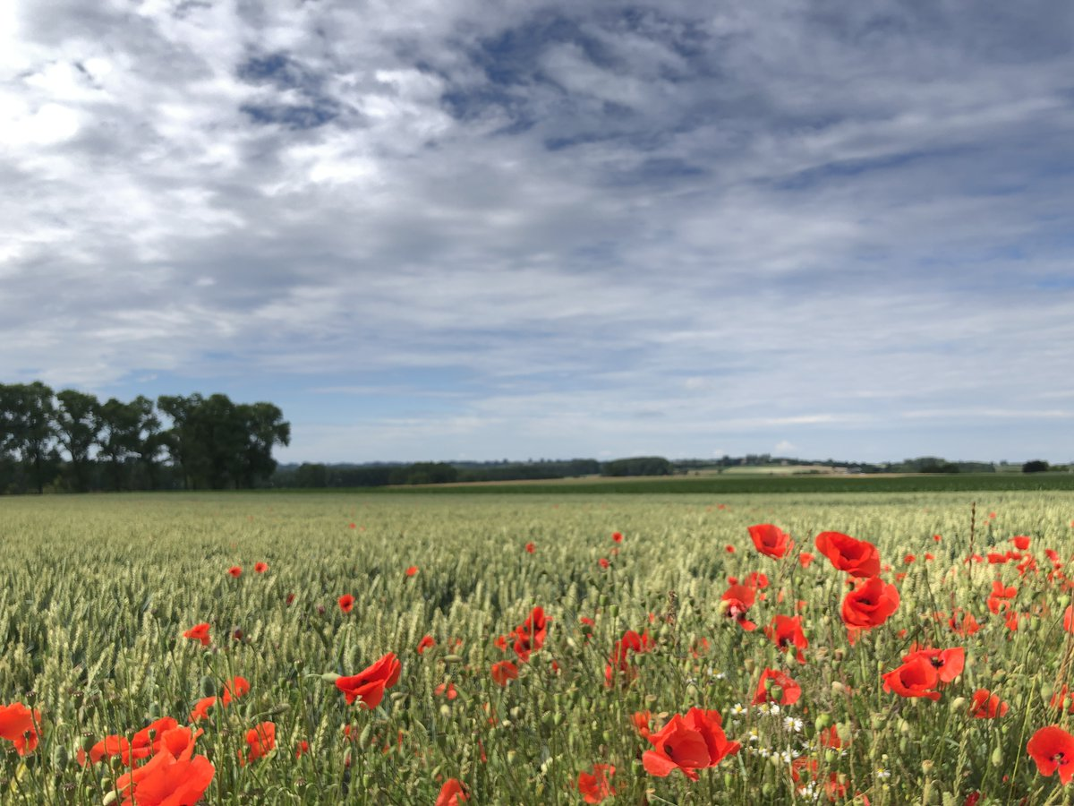 Summer🌻 colors will soon turn into a Fall 🍂🍁 palette 🎨. Here's a nice memory 📸 from a beautiful walk on 🌤 June 21st (Strijpen, Zottegem - Belgium 🇧🇪) https://t.co/t4gH9lR85p