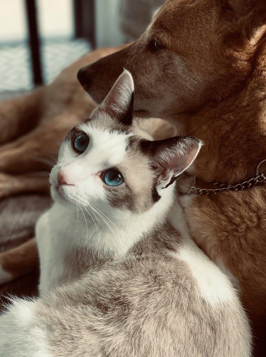 うちの猫に、美姫とか美少女とか沢山リアクションを頂きました。ありがとうございます。重ねて申し上げますが、この姫は武闘派のオスです。姫(武闘派のオス)の戯れで命を散らした、罪なき傘の末路をご覧ください。傘折るて。ゴリラか。