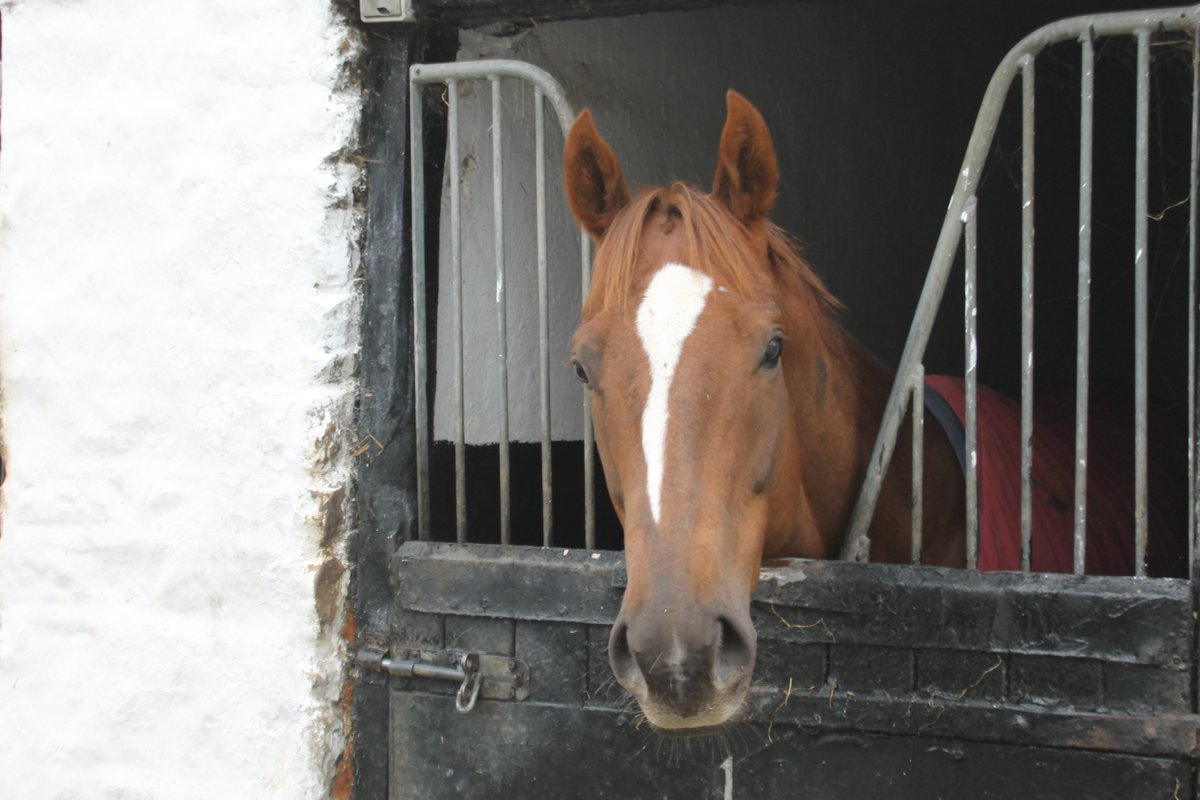 One runner today, with Arcavallo heading up to @HamiltonParkRC. Connor Beasley rides. Good luck to connections.