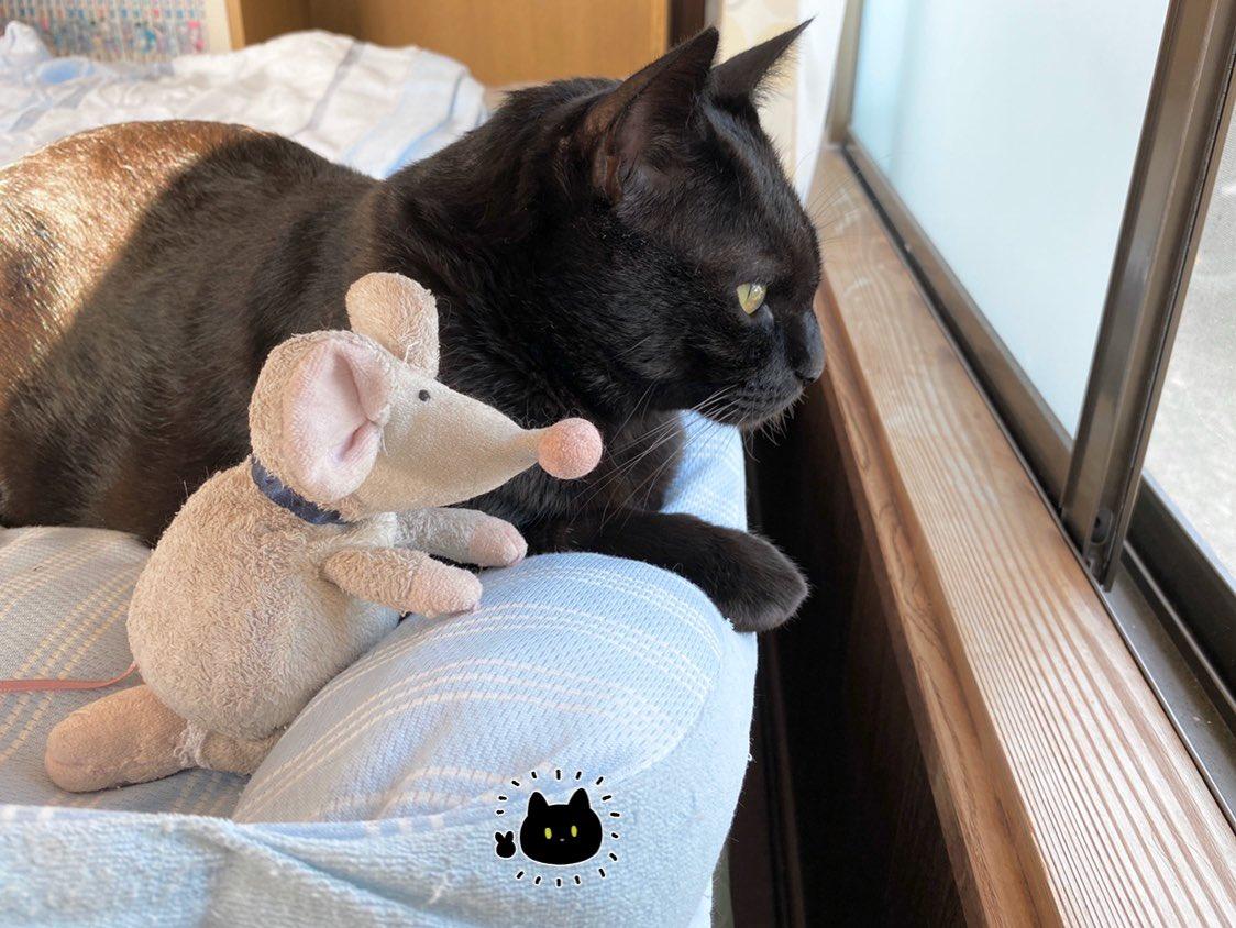 ネズミさんと一緒に窓の外を観察するのが結構気に入った様子