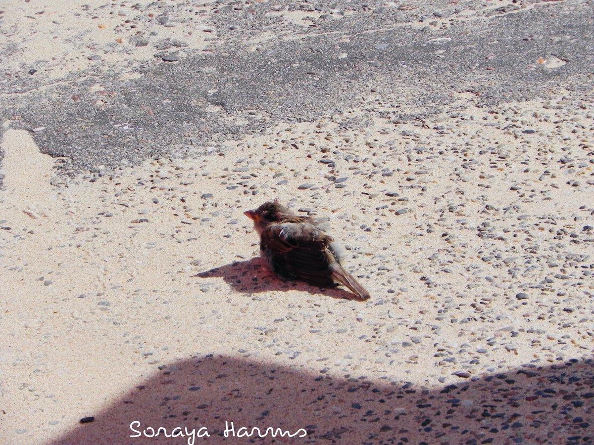 Genieten voor deze musjes lekker badderen in het zand. Wassenaarseslag #strand #genieten #mus #liefde #fotografie  @Dierbescherming @vogelnieuws @DierenAmsterdam 😘☀️📷 https://t.co/gF1RMcGV10