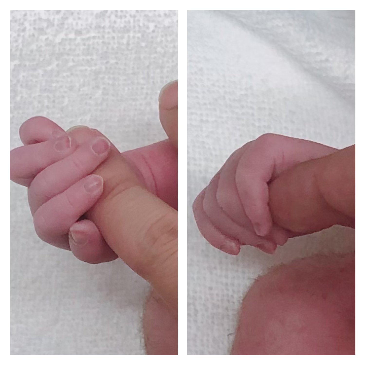 Seiyuu Natsuki Hanae Announces Birth of Twin Daughters