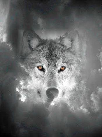 » Wolfstage: Eine Vollmondnacht im Wald  https://t.co/871w5iOniI  Eine Vollmondnacht im Wald ist etwas, das man erlebt haben muss. Ohne die geringste Angst folgte Yvonne dem Wolf. Ein Knurren weckte sie aus den Gedanken  #fantasy https://t.co/jp2eWaZTZn