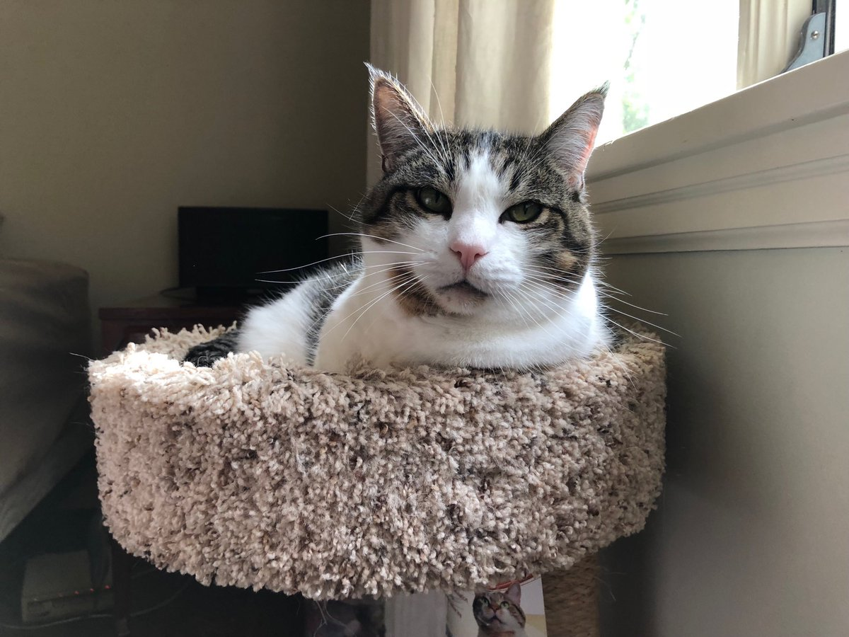"""Thank you so much to a very kind repeat donor, who yesterday added both to my medical fund: https://t.co/4LZuSH4pDO  and Pikachu""""s memorial fund: https://t.co/21il0Z2q5v  #CatsOfTwitter https://t.co/rMWvtkbjkf"""