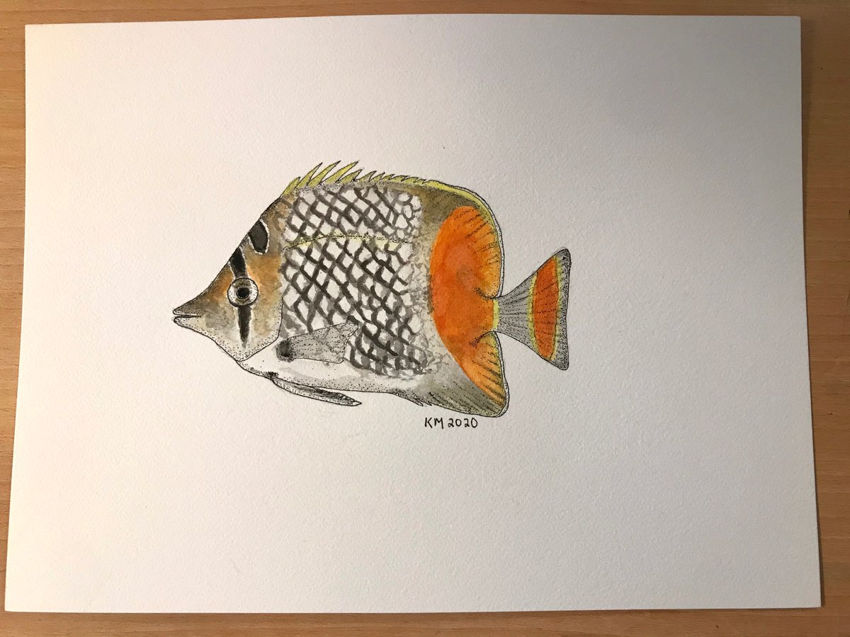 For #SundayFishSketch, a pearl scale butterfly fish. Found in Western Pacific & they form monogamous pairs during breeding. #fishes https://t.co/SA8ViK4ptZ
