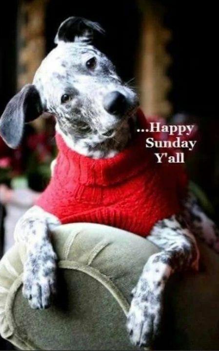 We hope everyone has an awesome Sunday Funday!! 🐾🐶🍁☀️ #SundayFundayVibes #ItFeelsGreatOutside #DogLife https://t.co/Vjxqw8hBc6