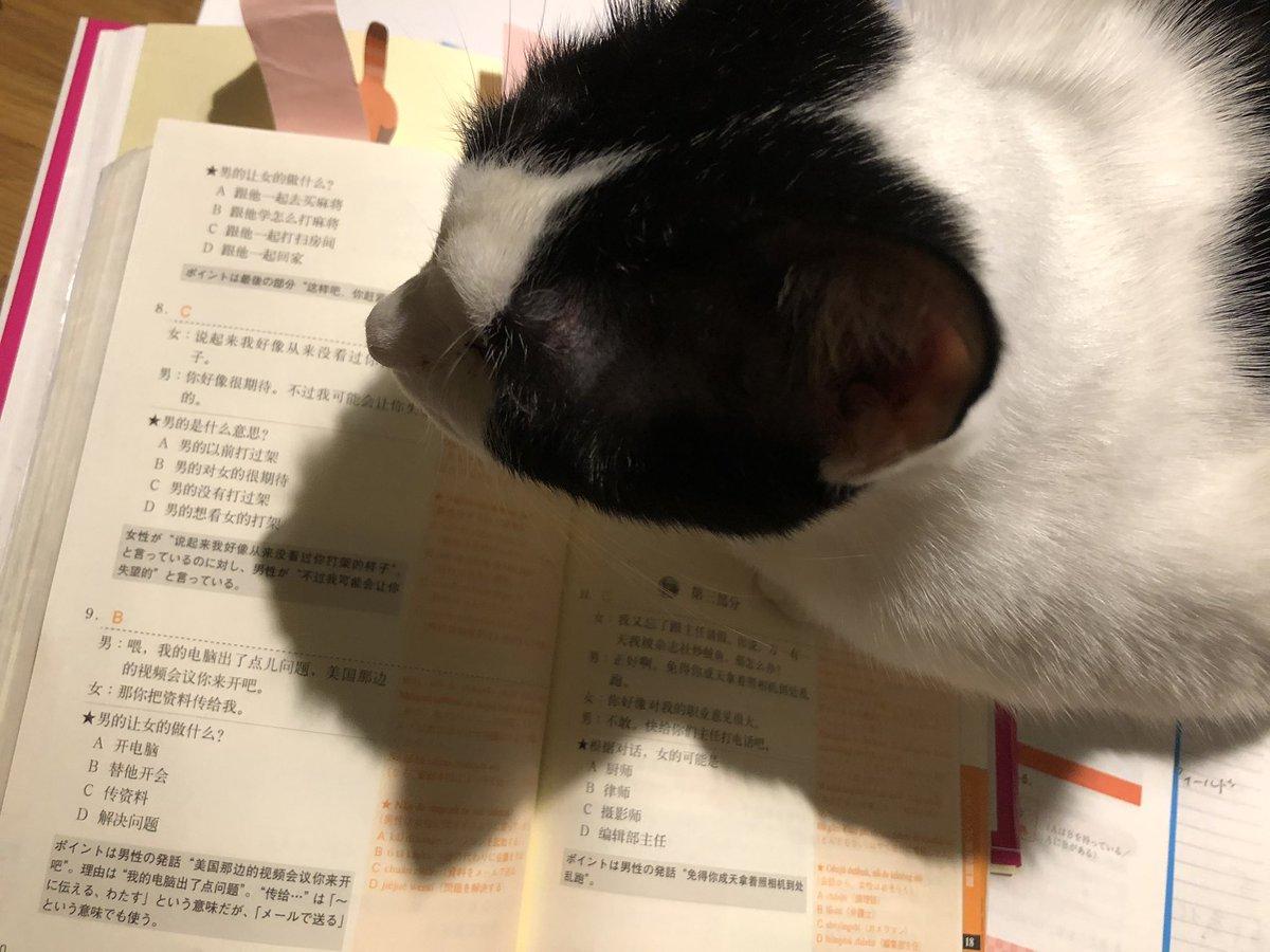 #ひとこと朝宣言振り返り 9/20 休み・🇬🇷レッスン◯宿題確認◯予習◯エリニカα音読◯・🇨🇳練習問題読解&リスニング&単語◯・duo暗唱◯dmm英会話◯・ヨガ◯・健康的な食事🍽◯・できれば洗濯×勉強終始猫に邪魔され英会話中も登場し先生の猫とオンライン対面した🤣充実した日曜日だった。