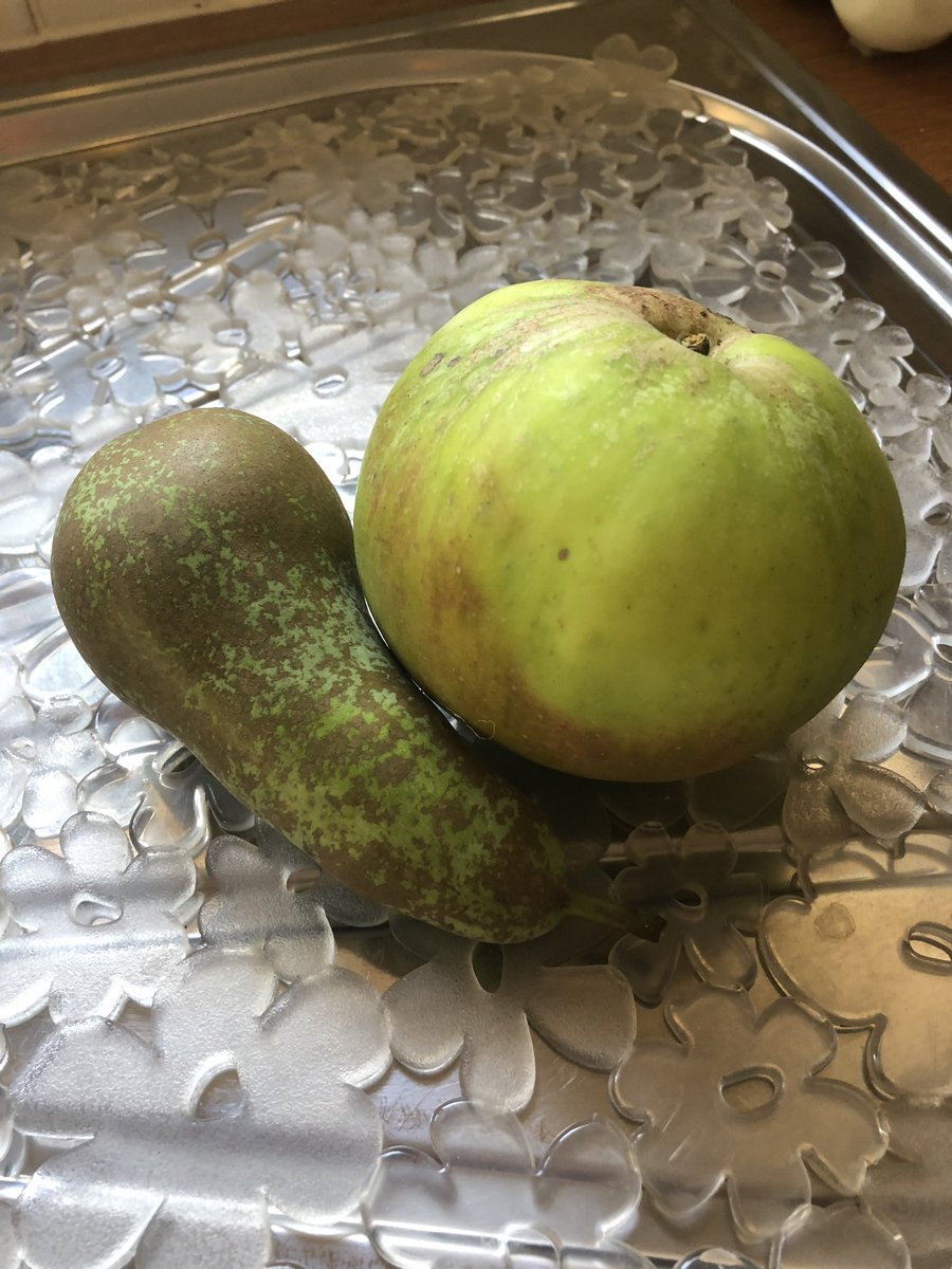 Apples and pears from my trees 😊 https://t.co/7BMmCdX1wL
