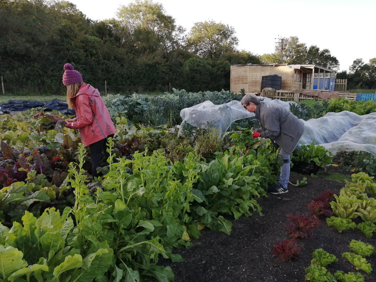 Early start at Treraven Farm for growers Jane and Bridget as they harvest mixed chard for our weekly veg shares #vegboxes #CSAFarm #communitysupportedagriculture  #Cornwall https://t.co/lzLv5yNIIu