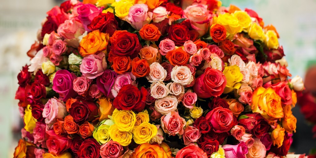 Roses are red, violets are… actually roses aren't just red. Break out the rose-colored reading glasses for a crash course in this iconic bloom! #flowermeanings #rosesarered #roses https://t.co/IpOKcW0nT8 https://t.co/fxzsYq95mZ