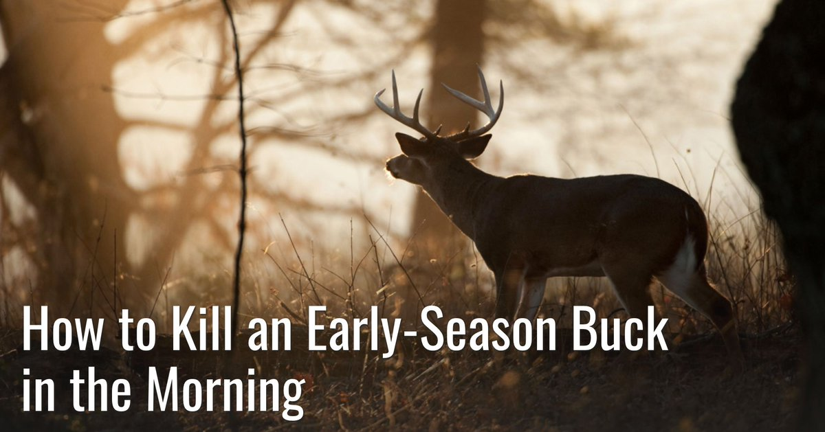 Traditional deer hunting wisdom says you can't kill a buck in the morning in September. That's flat out wrong. Here's how to do it. #meateater #fueledbynature