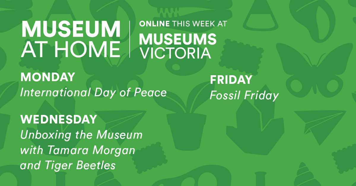 Coming up this week with #MuseumAtHome!  Don't miss your sneaky look behind the scenes as we continue unboxing the Museum. 👀 https://t.co/zhQ8Ph038T