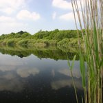 Image for the Tweet beginning: Hatchmere Nature Reserve. This is
