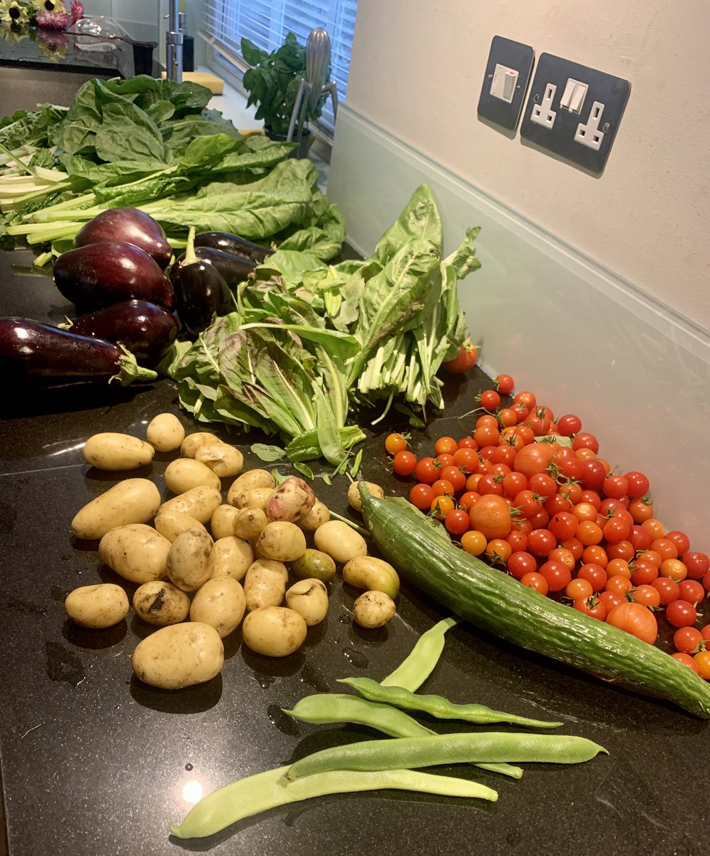 What a lovely day. The ingredients for today's luncheon of Parmigiana, Ruby Chard, French, Broccoli  quiche, Ratatouille, Potatoes and Apple pie came from the Allotment https://t.co/Z8IK41dyun