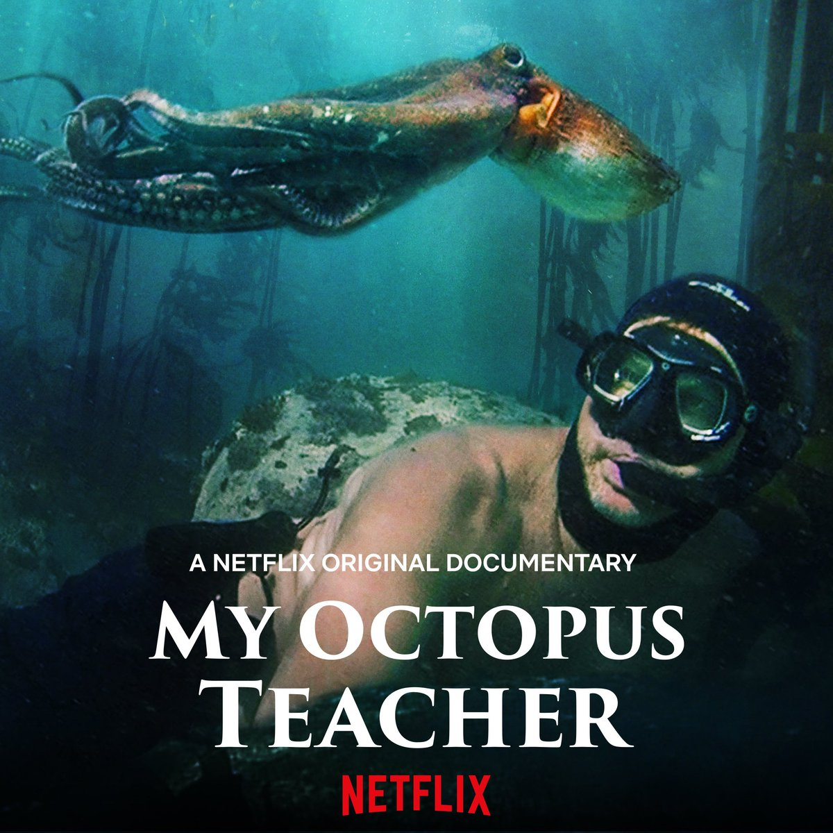 """Well, I watched """"My Octopus Teacher"""" on netflix: a flawed but moving documentary about a straight man who has a lifechanging erotic relationship with a female octopus. I cried, then read out loud to my friends the entirety of @amiasrinivasan's 2017 essay (https://t.co/ILun9KMlxz) https://t.co/Azefm8xJjU"""