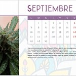 Image for the Tweet beginning: ❇️SEPTIEMBRE Para much@s empieza la ansiada