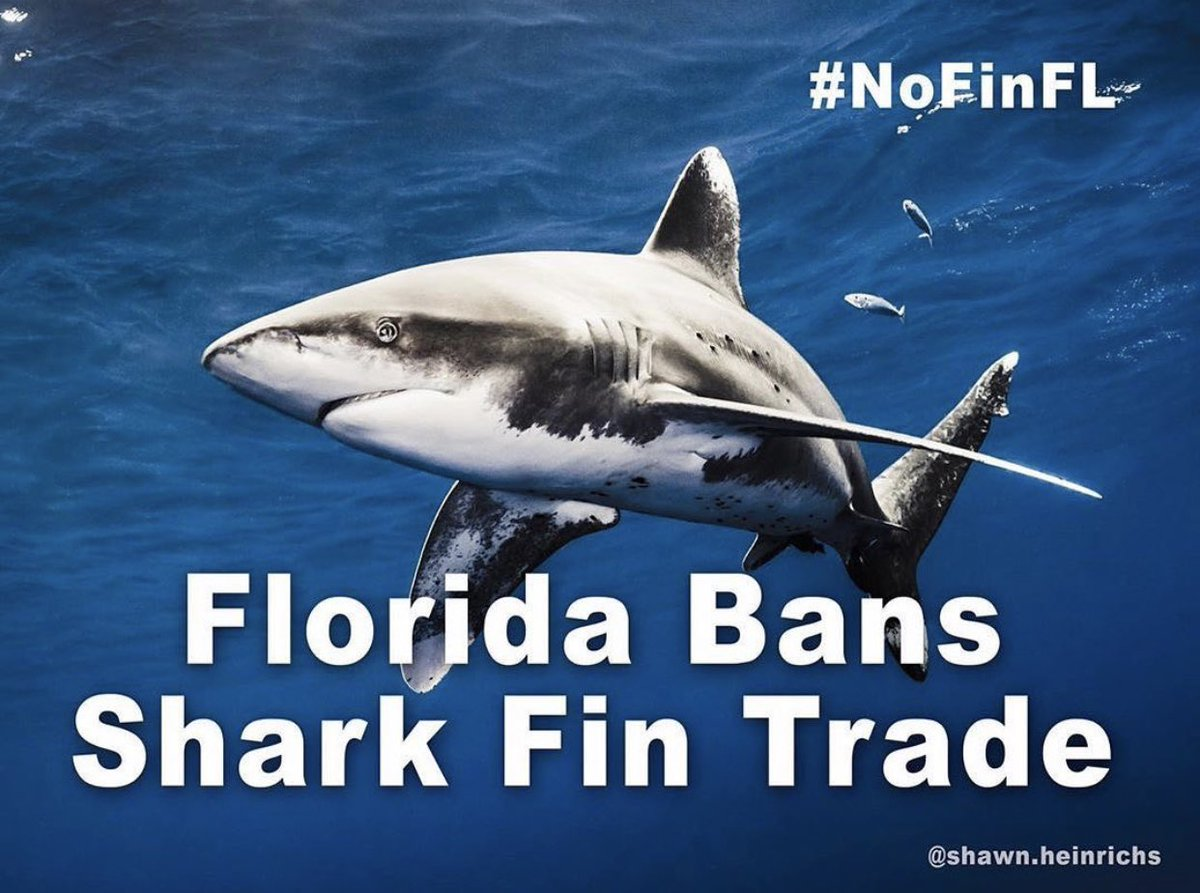 @PADI and @projectaware #awareweek starts off with Florida Banning #shark fin trade! #NoFinFL https://t.co/XatyJVqXGT