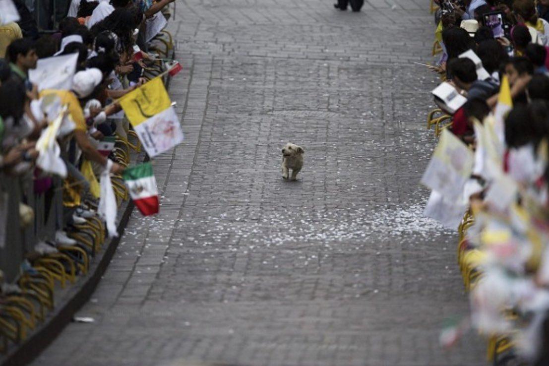 「このパレードは僕のために開かれてるんだ‼︎」って思ってるワンコ、いつ見ても幸せな気分になれる