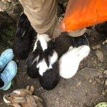 Image for the Tweet beginning: 時間がないけど、うさぎの大群と、たわむれてきた  #キャンプ #うさうさ
