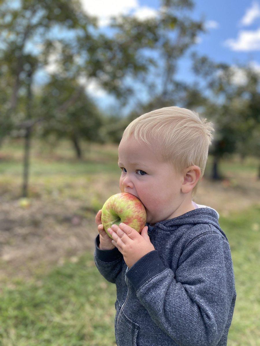 We went apple eating... I mean picking. #berkshireliving #honeycrisp https://t.co/KAVuekXL5i