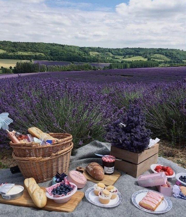 Picnic in lavender💜✨  #cottagecore #soft #softcore #lavanta #lavender #sun #picnic #friend #witch #farmcore #arthoe #lovecore #aesthetic #vintage #forest #softgirl #angelcore #forestcore #morikei #animalcore #purple #farmaesthetic https://t.co/T1iZXxMudm