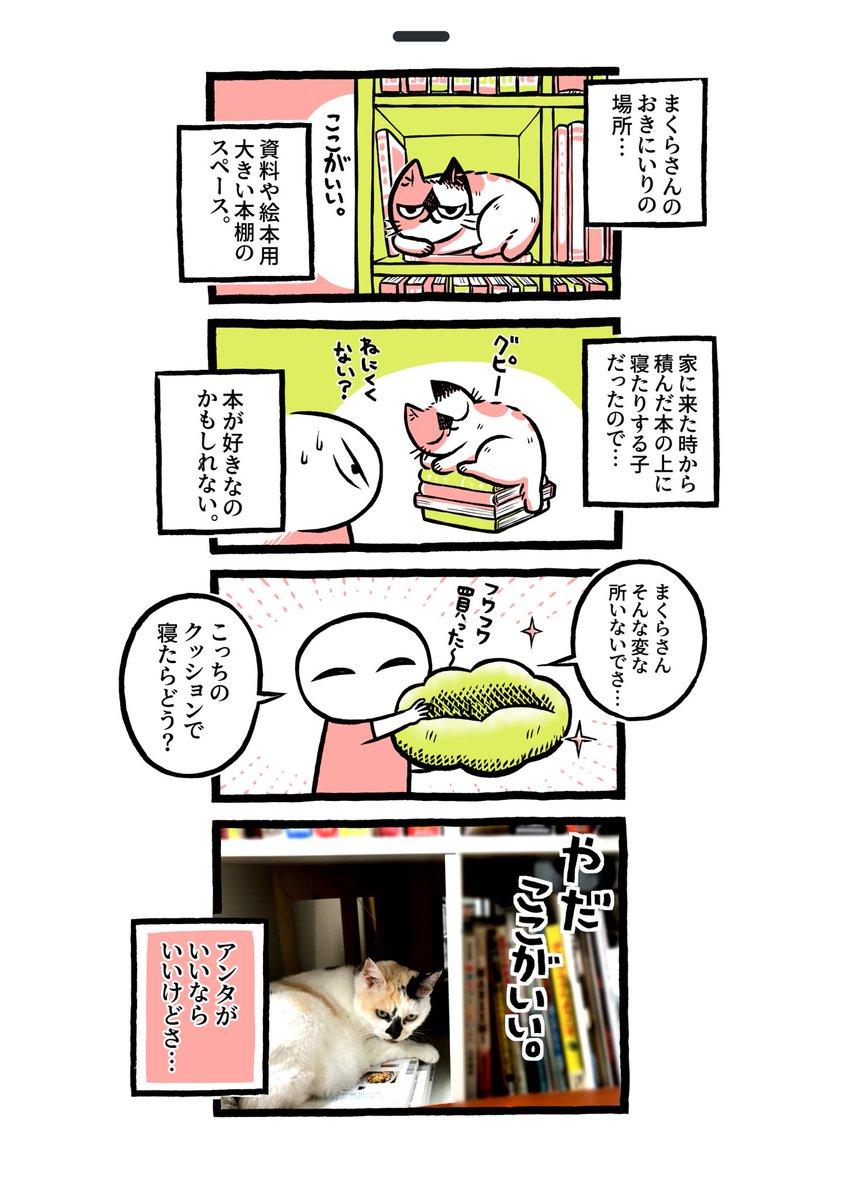 ヨボヨボの迷い猫を保護したら…おきにいりの場所を見つけよう【20】