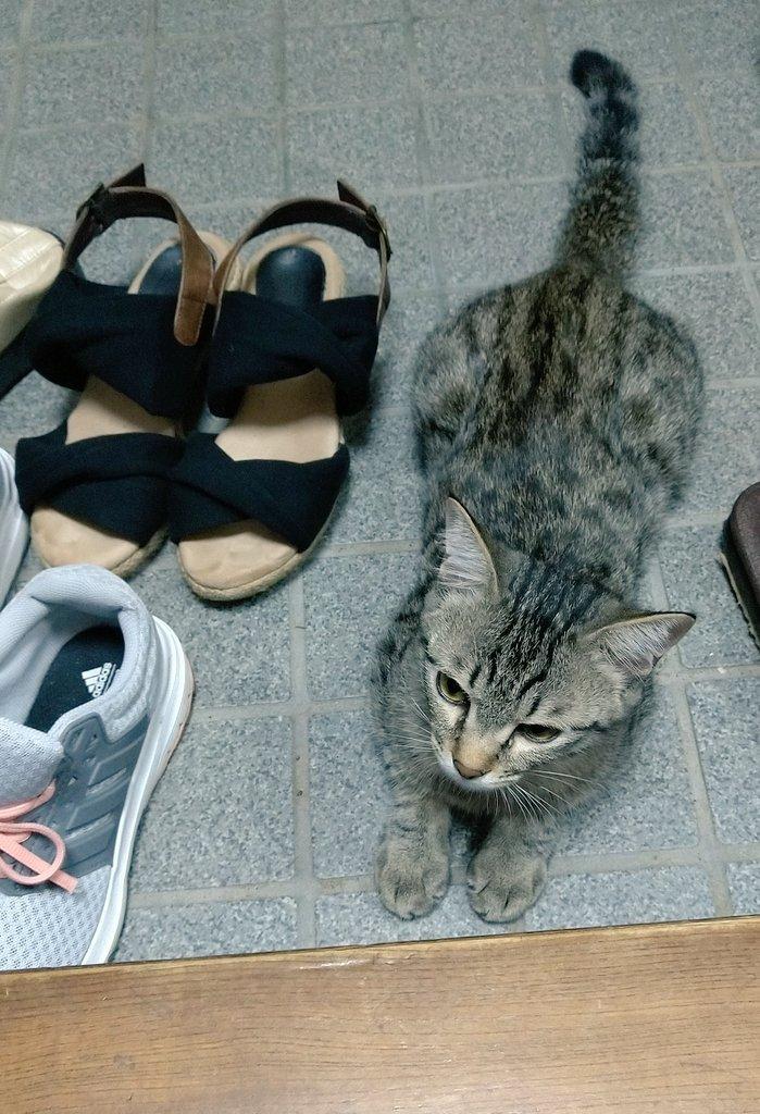 靴のフリをしている