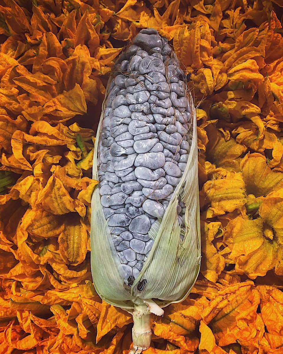 Ayoxochquilitl ihuan cuitlacochin.    «flor de calabaza y huitlacoche» #náhuatl https://t.co/bHg9B4oNmS