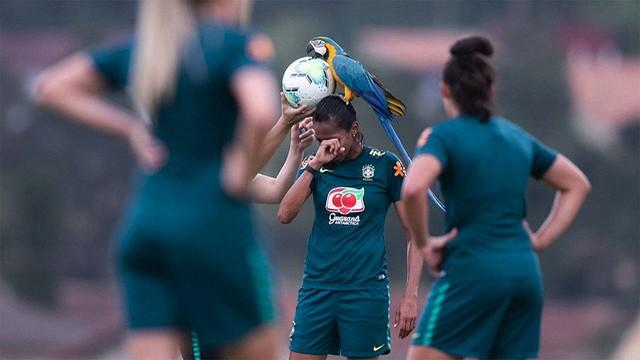 【珍客】ブラジルでサッカー試合にインコ乱入、選手の頭に乗る試合は一時中断したが、その後飛び去った。このインコは、施設に頻繁に訪れるそうで、スタッフらは「ペレ」と呼んでいるとのこと。