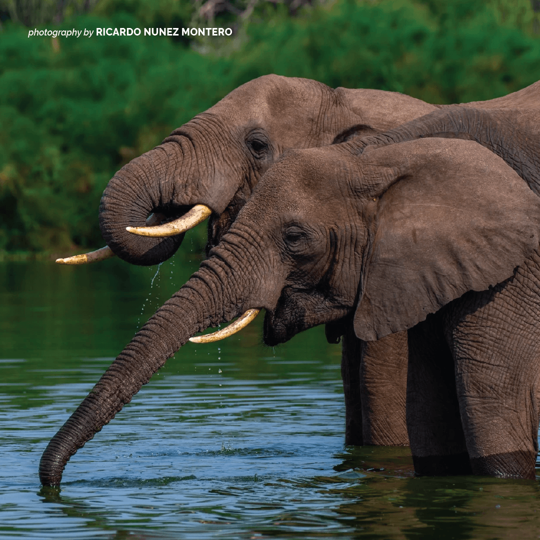 In order for conservation on the continent to be a success, women and girls must play a central role in biodiversity protection, policy formulation as well as wildlife management. Learn how AWF is supporting women to protect wildlife and wild lands. https://t.co/ePd9T8QeDr https://t.co/0gWfFNIHUc