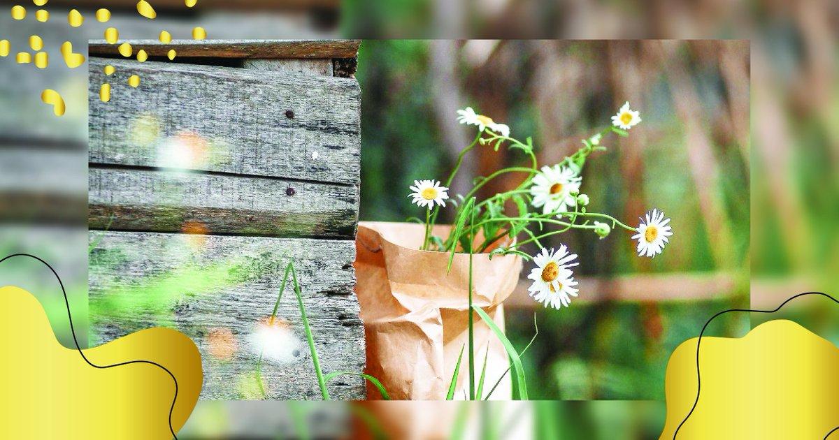 #rose #flowers #nature #naturelover #parfum #beauté #naturelle #view #naturalview https://t.co/n4H4EGy0Hm
