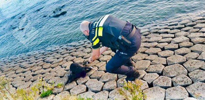 Dode geit bij Nieuwe Waterweg gevonden https://t.co/I8PfMD9rlE https://t.co/rlE8AvjVki