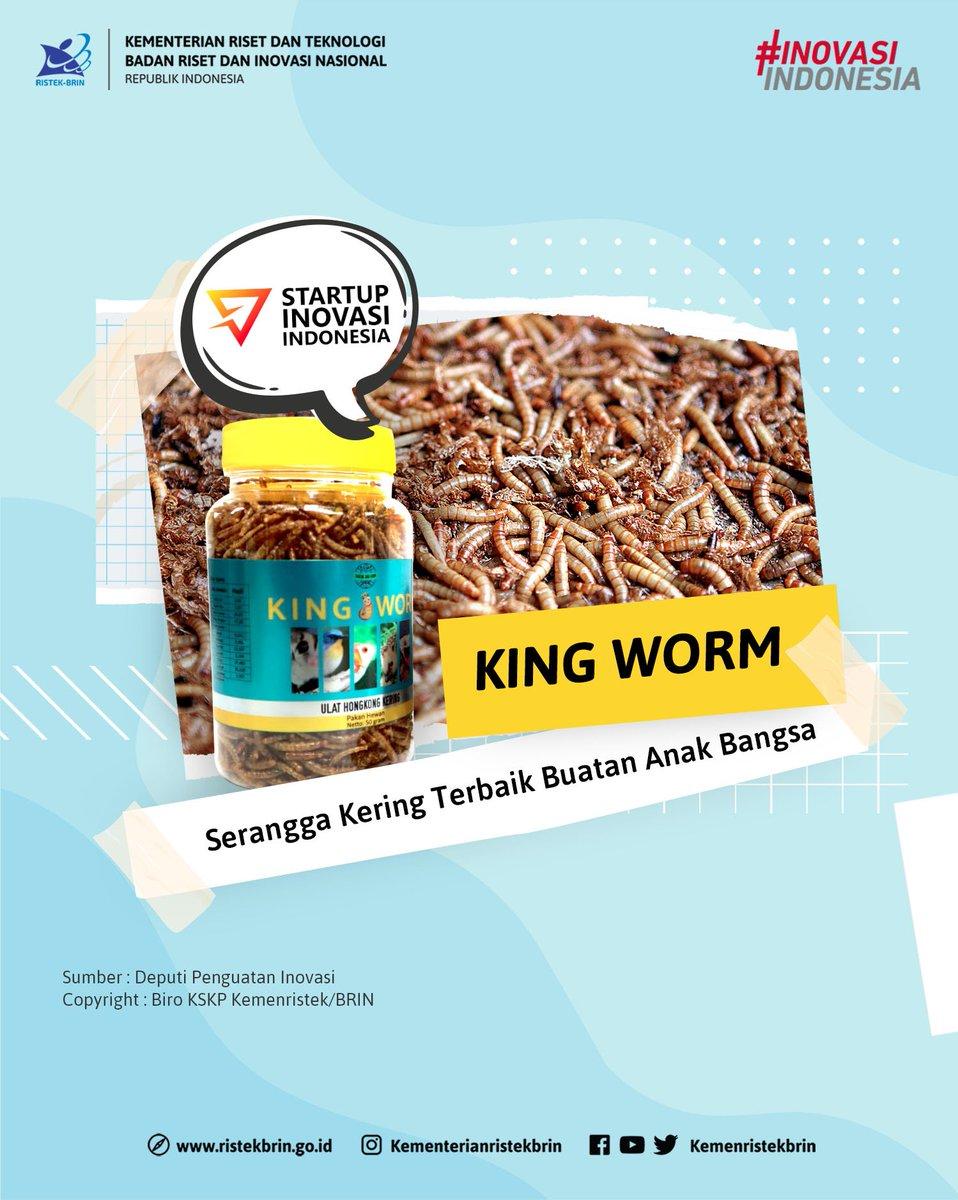 Tahukah #KawanIptek apa itu King Worm? King worm adalah inovasi ulat tepung/ulat hongkong kering yang dapat menjadi pakan hewan peliharaan dan hewan eksotis yang mengandung nutrisi tinggi. https://t.co/Qct2wm7WiT