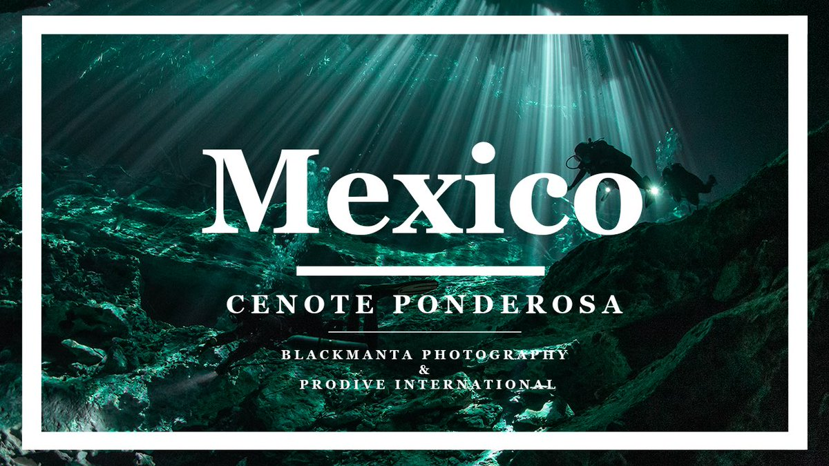 The next video in the Mexico series and we're heading underground! Cenote Ponderosa - Stunning light streaming through given this unearthly feeling - just beautiful! @prodiveinter  #ponderosa #Mexico #cenote #underground #cenotediving #scuba  (Click link) https://t.co/78uzII88oo https://t.co/pCCbdtPKVd