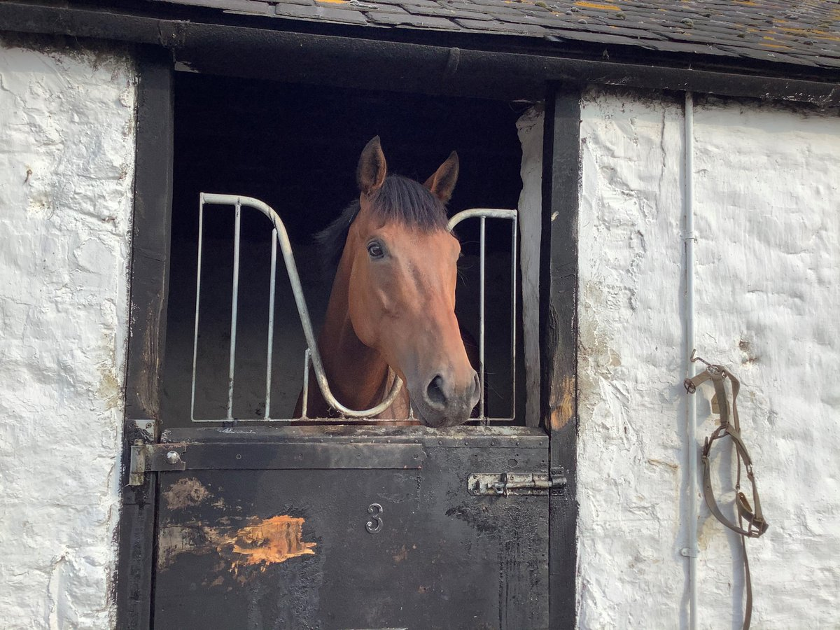 Two runners today. Langholm heads to @LeicesterRaces for an apprentice race with Aidan Redpath in the saddle. Blackrod runs at @HamiltonParkRC, with @CallumRodrigue4 riding. Good luck to connections.