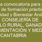 Image for the Tweet beginning: #España #beca #formaciónpráctica #sanidad #bienestaranimal